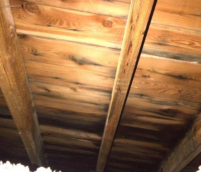 Mold in the Attic....Not Bats!