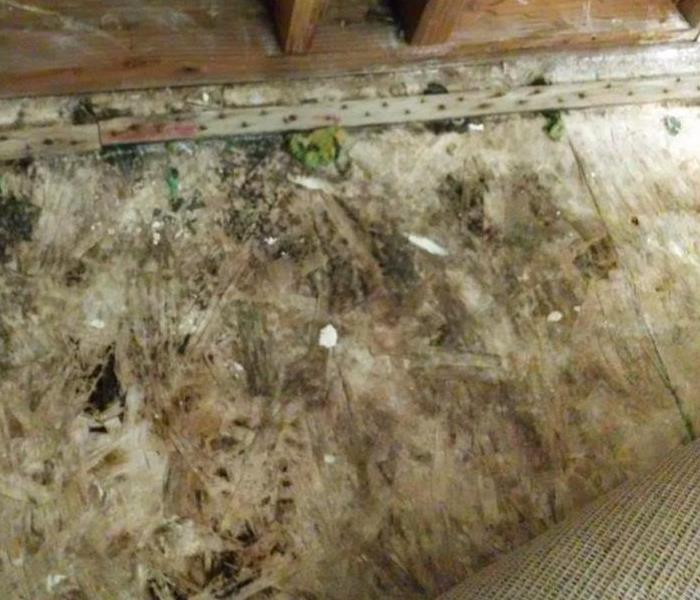 Mold Remediation Some Jobs are Best Left to the Pro's